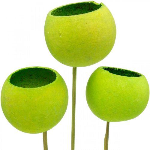 Dzwonek na patyku zielony suszony egzotyki 15szt.
