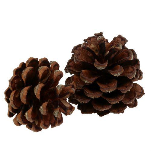 Szyszki sosnowe górskie małe Nature 1kg