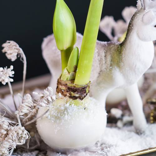 Wosk do oblewania kwiatów 1kg Biały