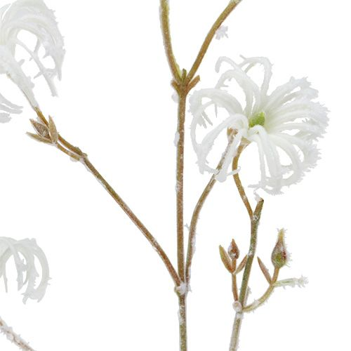 Clematis gałązka biała flokowana 62cm 3szt.