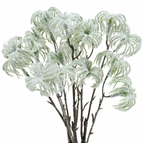 Clematis zielony śnieżny 43cm 3szt.