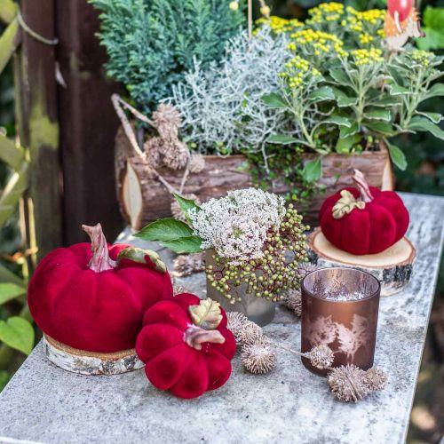 Deco Dynia Czerwona Jesienna Dekoracja Poliresin 15×12cm