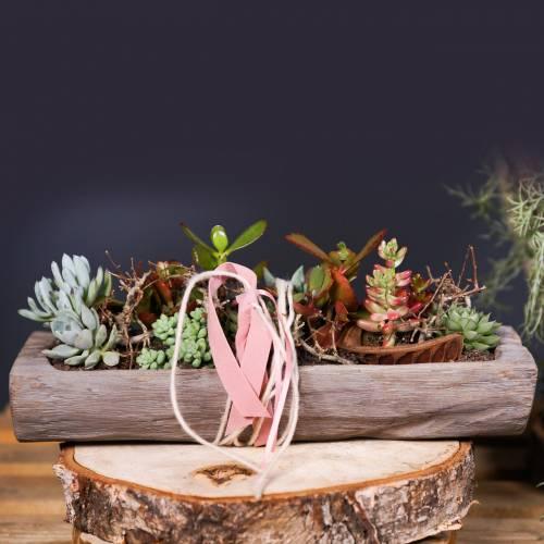 Misa dekoracyjna drewno Paulownia 49cm x 14cm H7cm