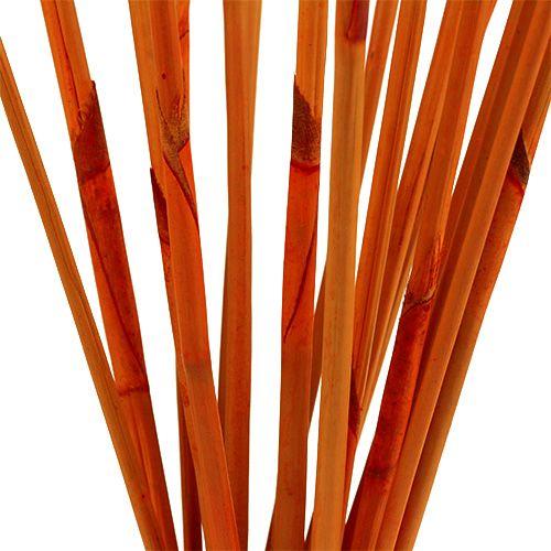 Ozdobne patyczki Elephant Reed Orange 20szt