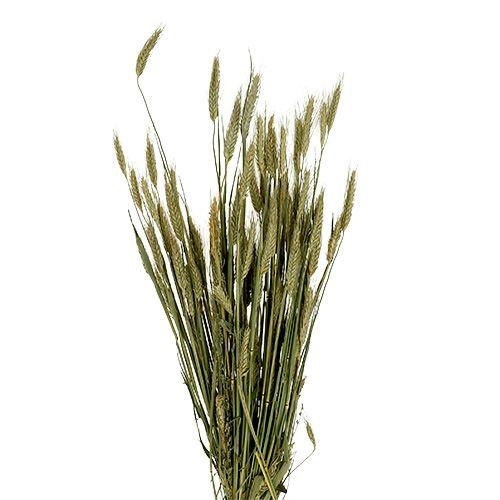 Zboże deco pszenżyto jako wiązka natura 1bund