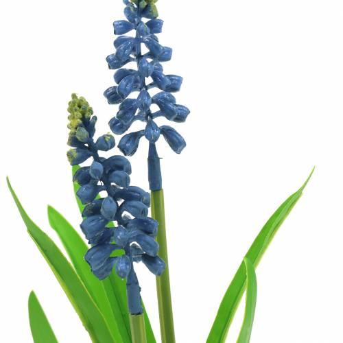 Hiacynt winogronowy w doniczce brzozowej niebieski 24 cm