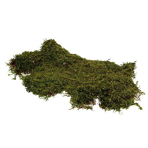 Mech indyjski mech leśny zielony natura 2kg
