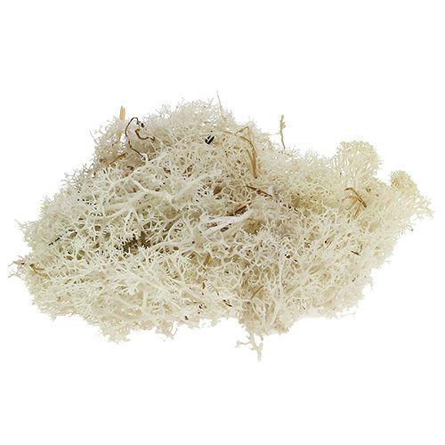 Mech reniferowy mech bielony 500g