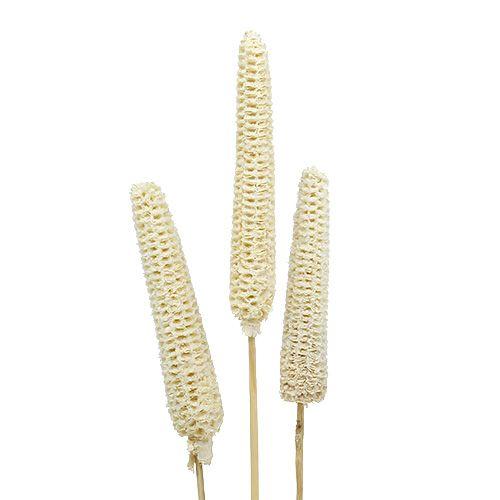Kukurydza bielona na kolbie 20szt.