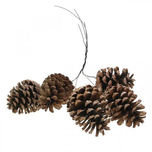 Szyszki morskie z drutem, okolicznościowe, dekoracja świąteczna, produkt naturalny H8-13cm Ø6-9cm 50szt.