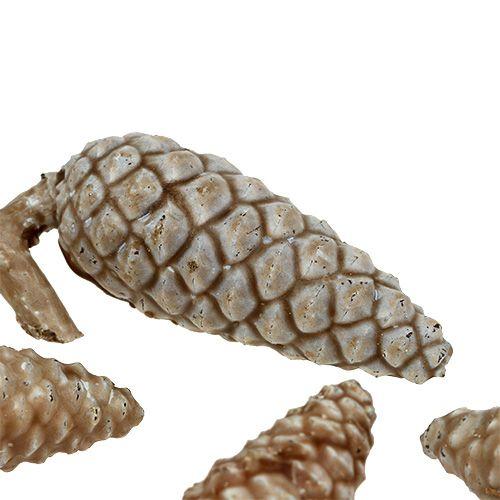 Stożek morski jasnobrązowy, woskowany 250g