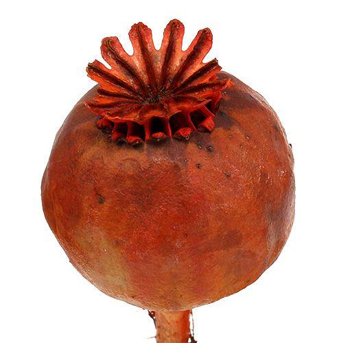 Główki maku barwione na pomarańczowo 100szt