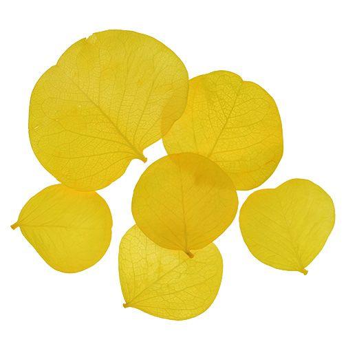 Moneta pozostawia limonkę 50gr