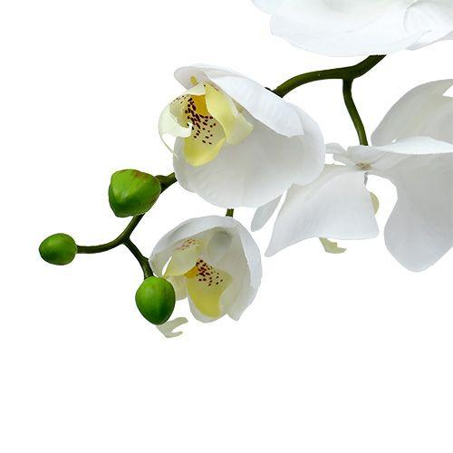Orchidea ćma 75cm Biały