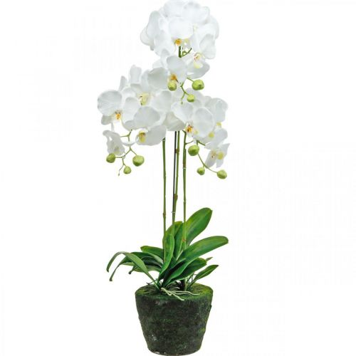 Orchidee sztuczne do doniczki białe 80cm