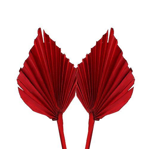 Włócznia palmowa mini czerwona 100szt