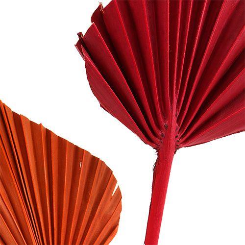 Palmowa włócznia mini dupa. Czerwony/Pomarańczowy 100szt.