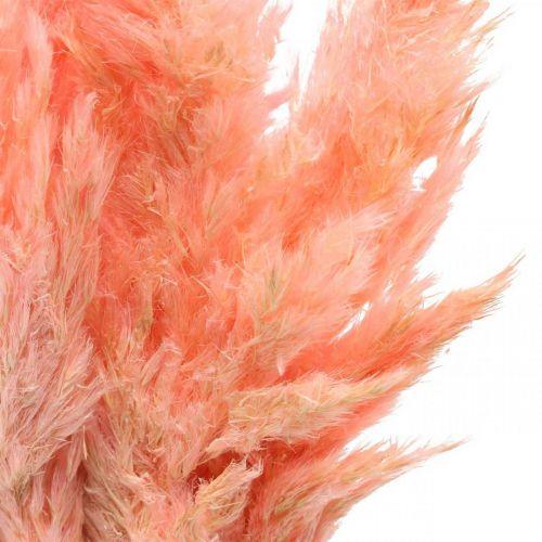 Trawa pampasowa suszona Różowa suszona florystyka 65-75cm 6szt w pęczku