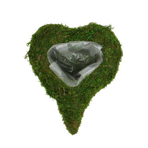 Mech roślinny serce 23cm x 19cm