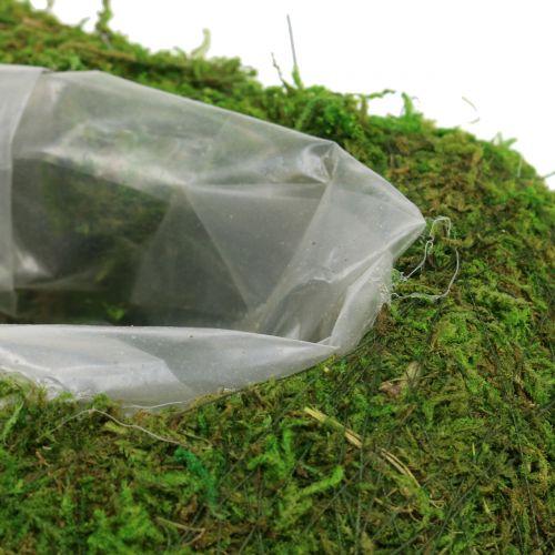 Mech roślinny 23 cm x 19 cm