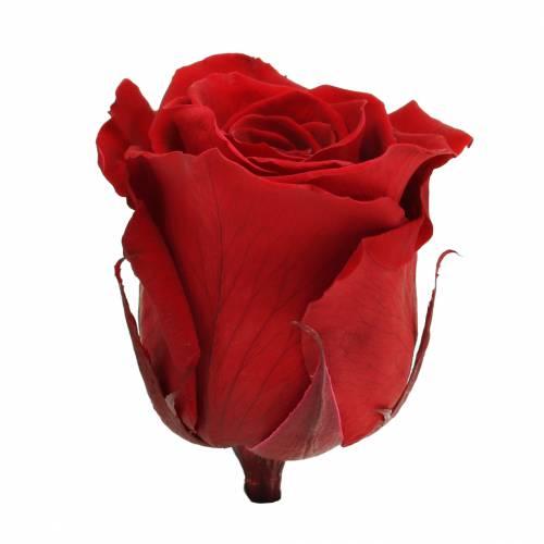 Róże nieskończoności duże Ø5,5-6cm czerwone 6szt