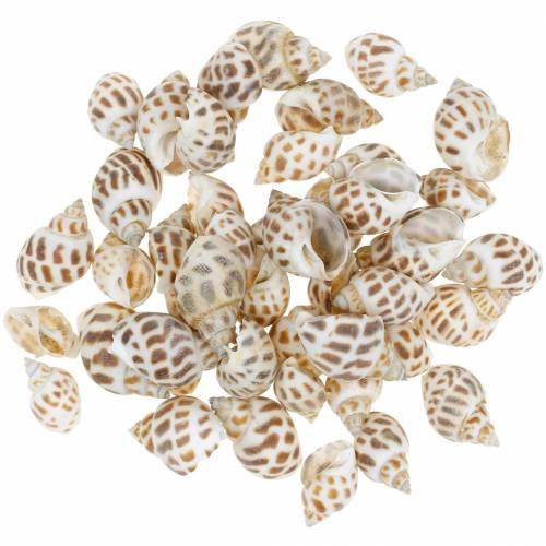 Deco ślimaki morskie natura 1-4cm 1kg