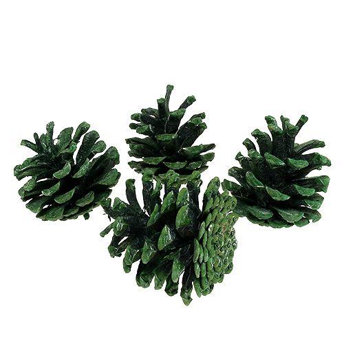 Szyszka sosnowa czarna zielona szroniona 5-7cm 1kg