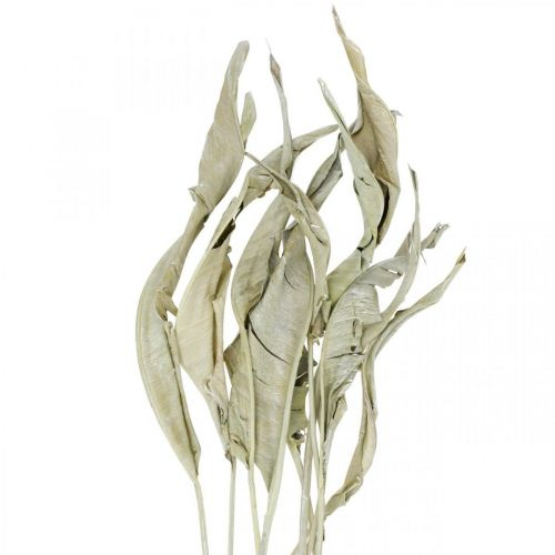 Strelitzia liście suszone zielone szronione 45-80cm 10szt.