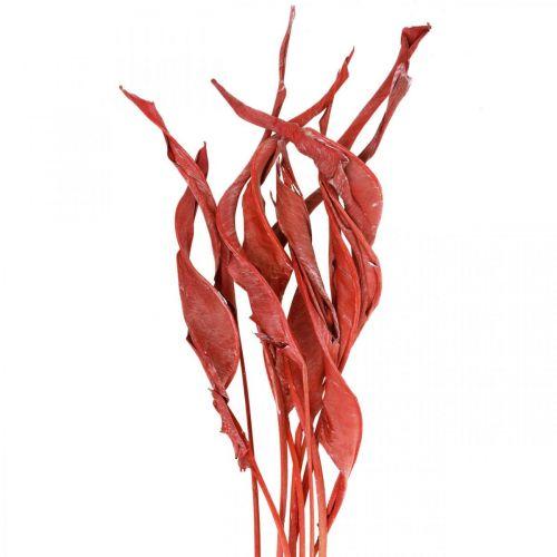 Strelitzia liście czerwone szronione suche florystyczne 45-80cm 10szt