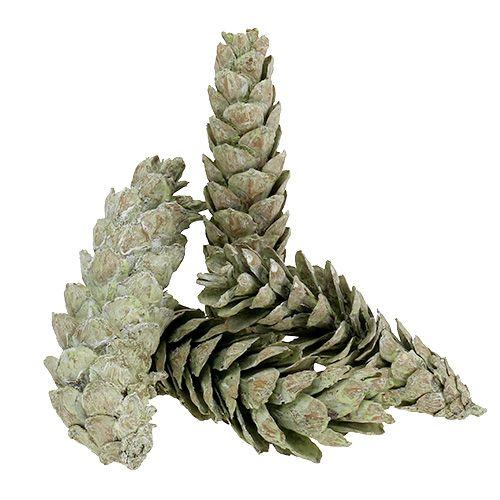 Szyszki strobusowe jako naturalna dekoracja 15cm - 20cm zielone 50szt.