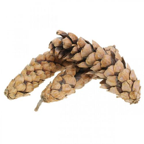 Szyszki sosnowe Weymouth Pine Strobus Naturalne Mieszane 2,5kg