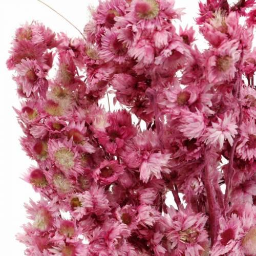 Suszone kwiaty różowe Bukiet suszonych kwiatów różowy wys. 21cm
