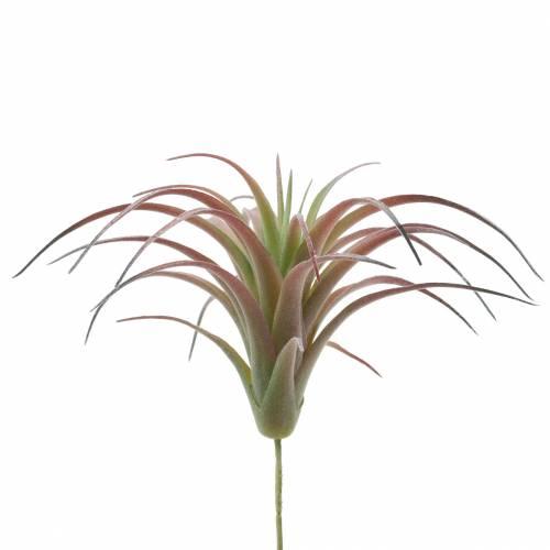 Tillandsie zielono-czerwone flokowane 15cm 4szt.