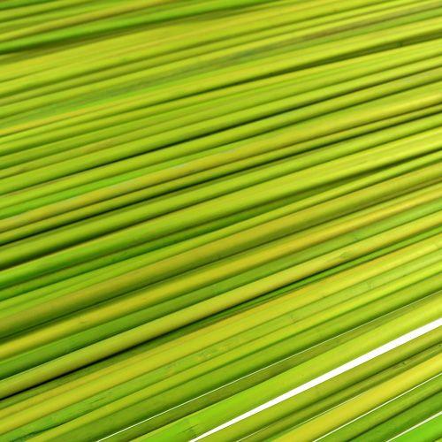 Patyczki dekoracyjne Tonkin 70cm jasnozielony 150p