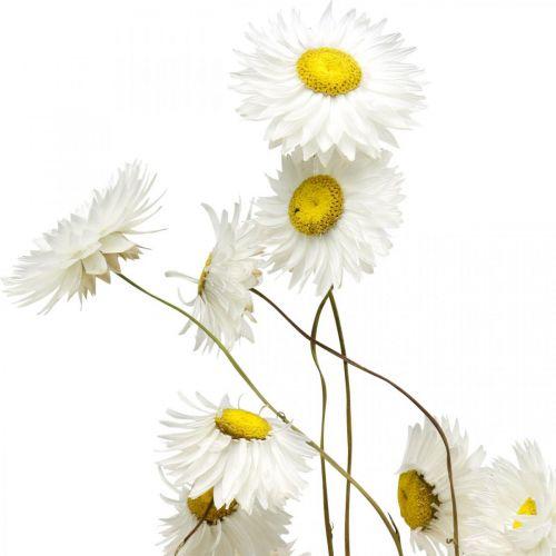 Kwiaty suszone Acroclinium Kwiaty białe suszone florystyka 60g