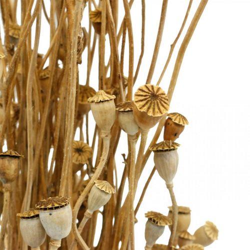 Suszone Kwiaty Mak Kapsułki Natura Suszone Dzikie Suche Deco Bundle 100g