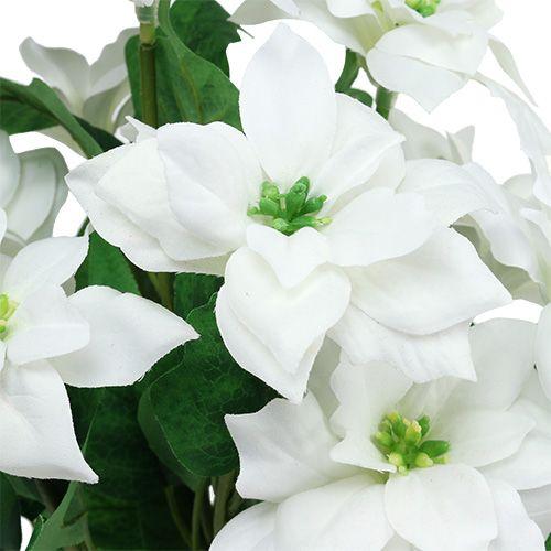 Bukiet poinsettia biały L45cm