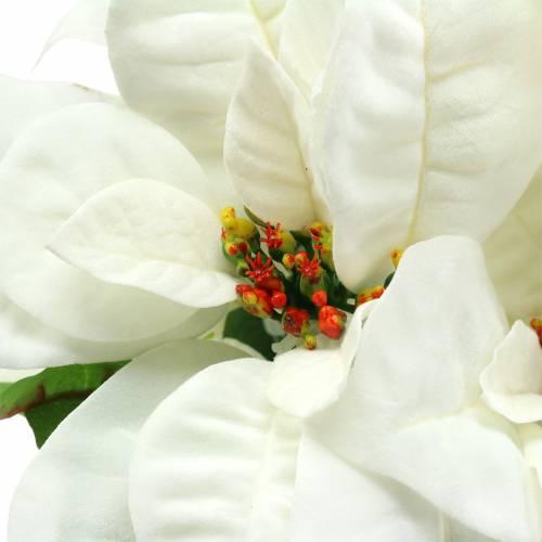 Bukiet Poinsecji Biały 52cm