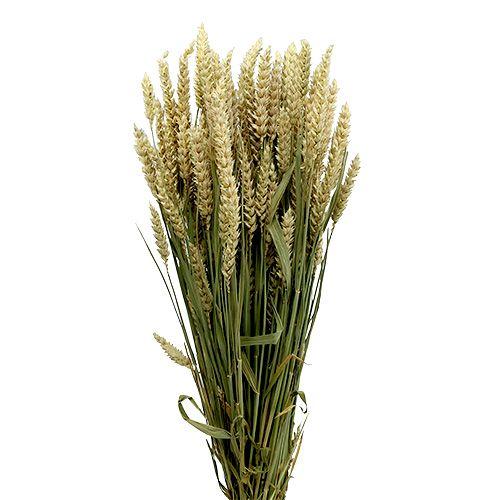 Wiązka pszenicy natura 1szt Pszenica dekoracyjna