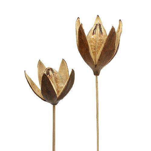Dzika lilia na patyku w naturalnych kolorach Ø6,5cm D55cm 45szt