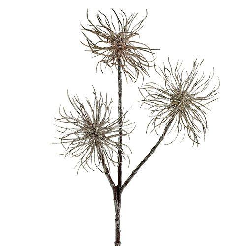 Witch Hazel Branch Champagne 45cm 3szt.
