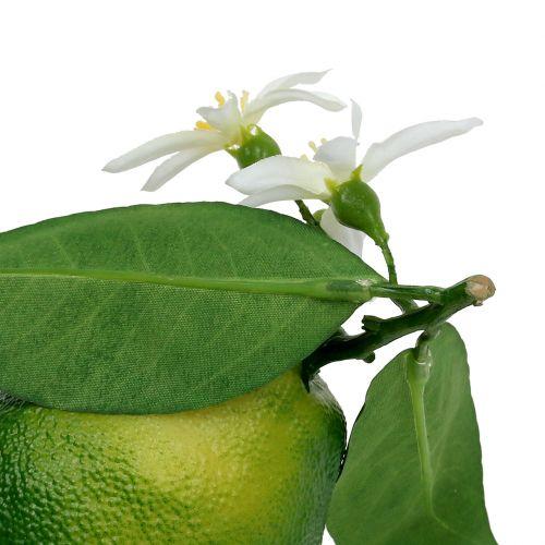 Cytryny z kwiatem 9,5cm zielone 4szt