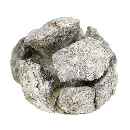 Szyszki cyprysowe 3cm białe płukane 500g